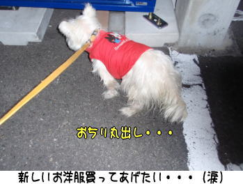 image211217.jpg