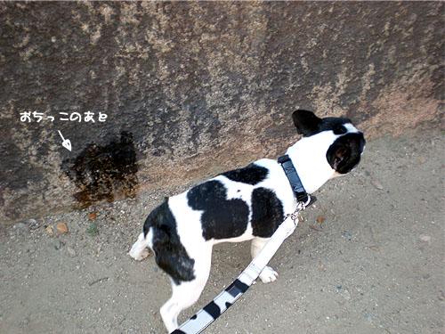牛柄が素敵よん♪
