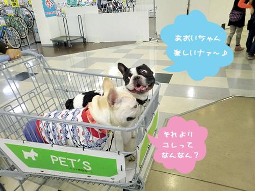お買い物カート初体験!