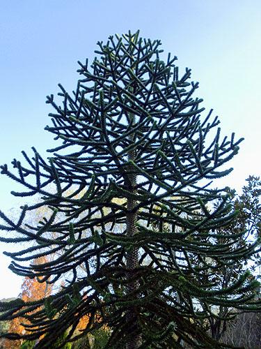 不思議な木だぁ~