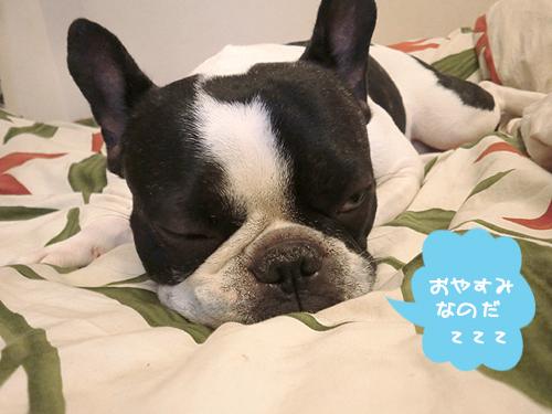 おやすみんこzzz
