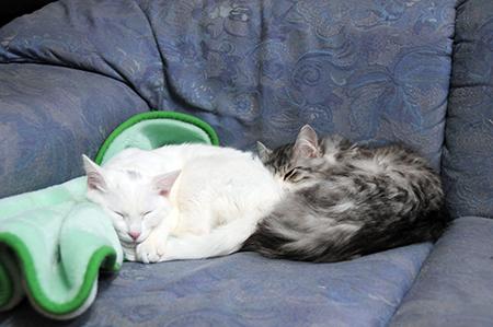 ねねとミミ、仲良し寝