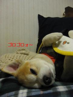 もう眠い・・・