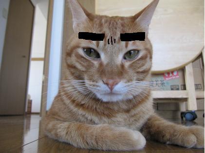 眉毛猫02