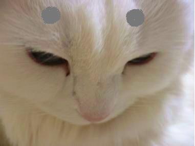 眉毛猫03