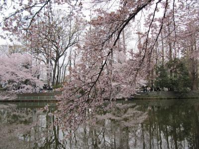 2010花見03