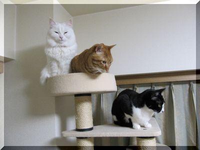 我が家の3猫