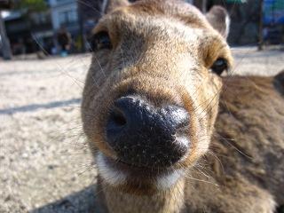 20100109_宮島2