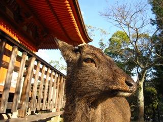20100109_宮島21