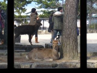20100109_宮島9