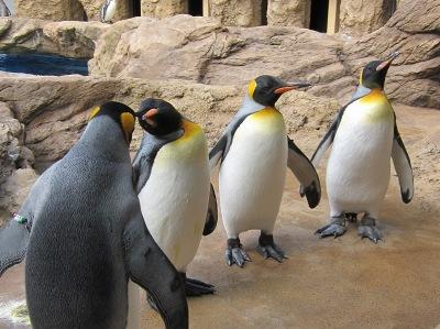 20100324_オウサマペンギン1