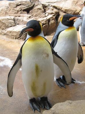 20100324_オウサマペンギン2