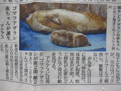 20100324_ゴマアザラシの赤ちゃん