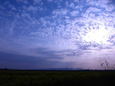 20100404_菜の花畑10