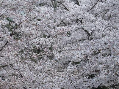 20100405_宮島18