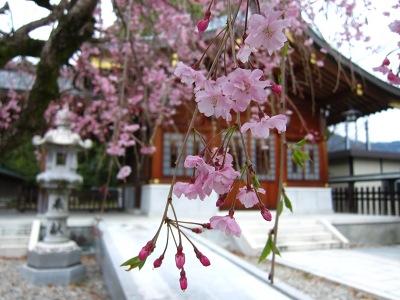 20100410_速谷神社4