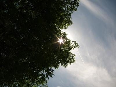 20100508_新緑と光