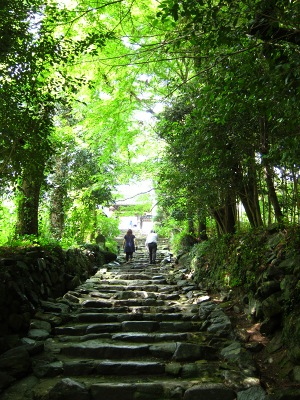 20100619_アジサイ寺3