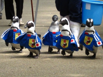 20100623_松江FPペンギン_1