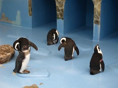20100623_松江FPペンギン_13