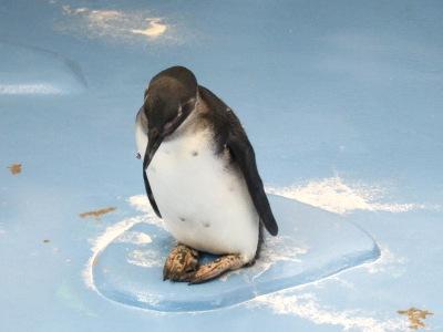20100623_松江FPペンギン_14
