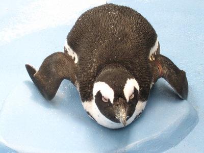 20100623_松江FPペンギン_17