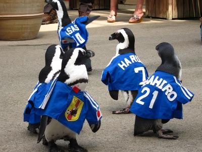 20100623_松江FPペンギン_2