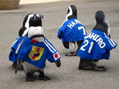 20100623_松江FPペンギン_3