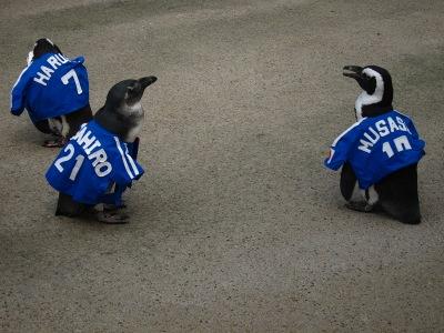 20100623_松江FPペンギン_4
