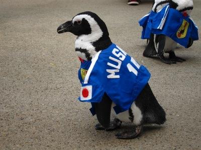20100623_松江FPペンギン_5