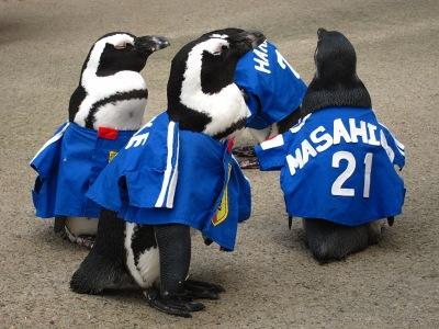 20100623_松江FPペンギン_8