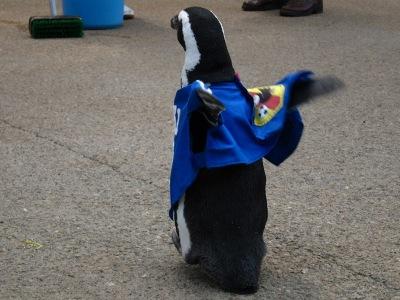 20100623_松江FPペンギン_9