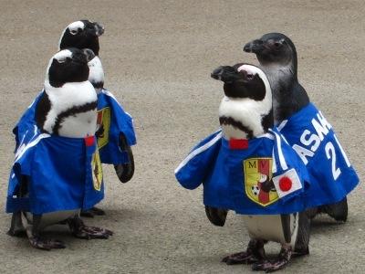 20100623_松江FPペンギン_19