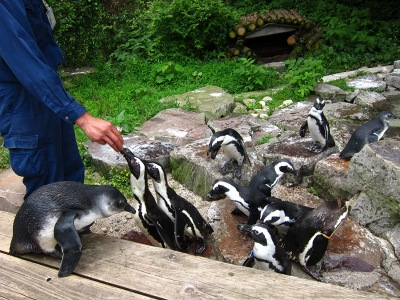 20100623_松江VPペンギン6
