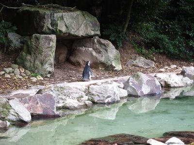 20100623_松江VPペンギン3