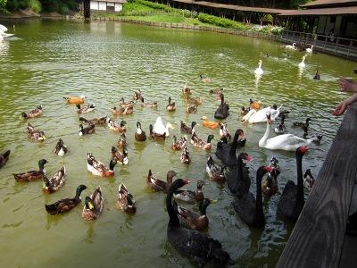 20100623_松江VP水鳥池1