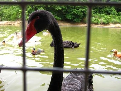 20100623_松江VP水鳥池4