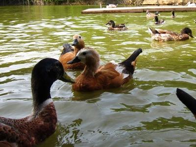 20100623_松江VP水鳥池6