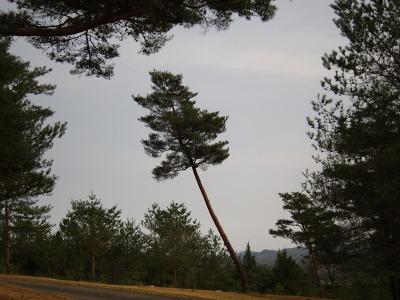 20100322_風土記の丘9