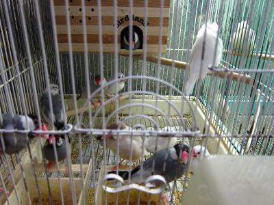 20100724_文鳥さん