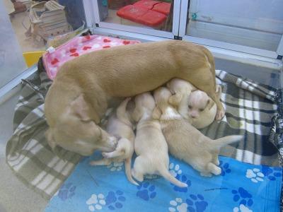 20100724_犬の赤ちゃん
