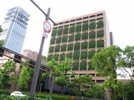 20100726_市役所のアサガオ(夕)