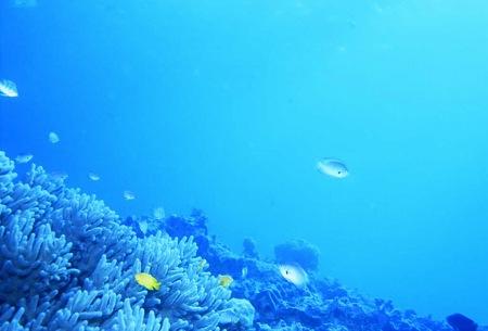 20100821_珊瑚と魚