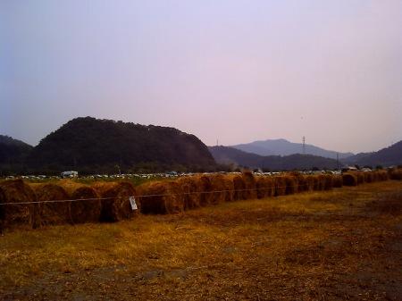 20100822_笠岡のひまわり10-v