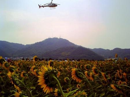 20100822_ひまわりカーニバル1-v