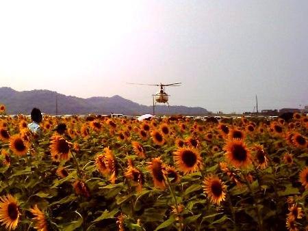 20100822_ひまわりカーニバル3-v