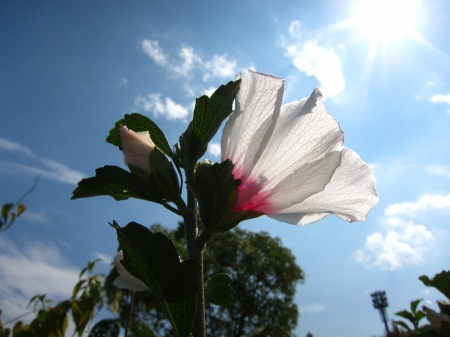 20100919_空を見上げる花