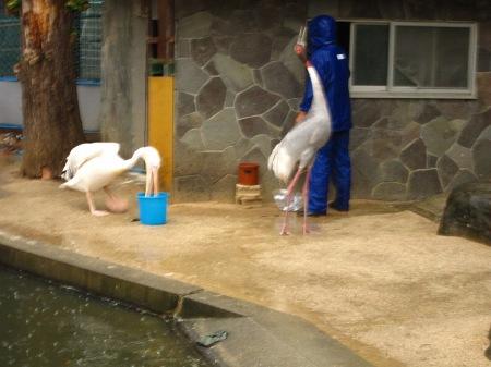 20101003_えさタイム