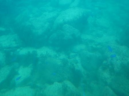20101005_海中3