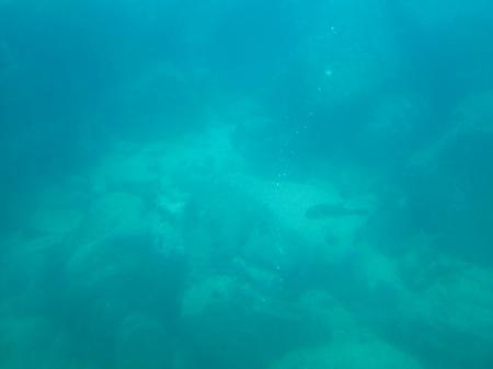 20101005_海中5